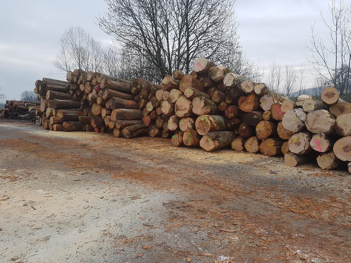 coupe bois arbre